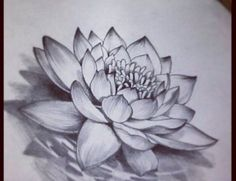 Realistic Lotus Flower Tattoo Image - Photos, Pictures and ...
