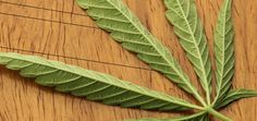 The patent claims exclusive rights on the use of cannabinoids for treating neurological diseases, such as Alzheimer's, Parkinson's and stroke, and diseases caused by oxidative stress, such as heart attack, Crohn's disease, diabetes and arthritis.