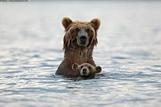 Funny pictures about 25 Of The Best Parenting Moments In The Animal Kingdom. Oh, and cool pics about 25 Of The Best Parenting Moments In The Animal Kingdom. Also, 25 Of The Best Parenting Moments In The Animal Kingdom photos. Amor Animal, Mundo Animal, Baby Animals, Funny Animals, Cute Animals, Wild Animals, Animals And Their Babies, Animal Babies, National Geographic Fotos