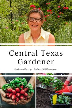 Acclaimed Central Texas Gardener producer Linda Lehmusvirta offers pandemic-proof advice for growing food and sprucing up your yard. Great for folks near Austin and San Antonio! Painted Clay Pots, Texas Gardening, Central Texas, Square Foot Gardening, Look At The Stars, Salvia, Planting Seeds, How To Relieve Stress, San Antonio