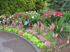 Lettuce, Cobbity daisy, Snapdragons, and Peonies by Missouri Botanical Garden, via Flickr