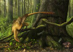 Jeholornis - bird evolution ancestor