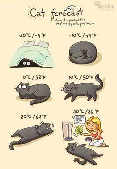 Catsu The Cat - Amanda Patterson