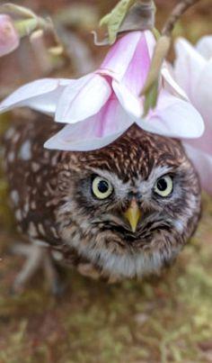 Hiding owl - by Tanja Brandt
