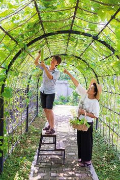 สวนผัก จัดสวย ปลูกประดับบ้านเป็นอาหารประจำครัว-บ้านและสวน