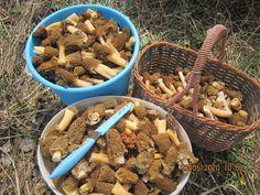 Изображение Stuffed Mushrooms, Vegetables, Food, Meal, Essen, Vegetable Recipes, Hoods, Meals, Stuff Mushrooms