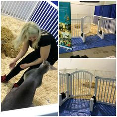 or in this case, kangaroo fence! Indoor Pets, Dog Fence, Dog Daycare, January 1, Dog Boarding, Zoo Animals, Outdoor Ideas, Dog Days, Outdoor Gardens
