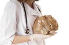 Rabbit hepatitis E virus (HEV) was detected in human patients infected with HEV, highlighting the zoonotic potential of this virus. Rabbit Cages, Dental Problems, Wellness Programs, Pet Rabbit, Medical Conditions, Stress And Anxiety, Your Pet, Rabbits, Gatos