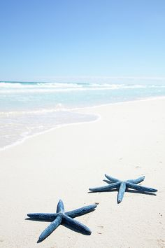 Two Blue Starfish On Tropical Beach Print By Lulu