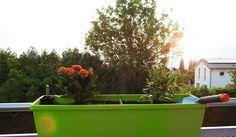 [Werbung] Da ist das gute Stück mit Pflanzen: emsa My CITY GARDEN Balkonkasten (mit Wasserspeicher), gefüllt mit Qualitätserde von COMPO SANA und befestigt durch emsa Balkonkastenhalter VARIO COMFORT. https://blackedgold.wordpress.com/2018/05/21/emsa-my-city-garden-balkonkasten-teil-1/ https://blackedgold.wordpress.com/2018/05/21/emsa-my-city-garden-balkonkasten-teil-2/ - https://produkttest.emsa.com/?view=social&type=reply&id=463454