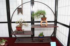 beautiful bonsai shohin setup