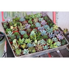 Succulents) Succulent Wedding Favors by The Succulent Source - Succulents for all occasions - Assorted Succulents Succulent Table Decor, Succulent Party Favors, Succulent Wedding Centerpieces, Succulent Gifts, Succulent Cakes, Plant Wedding Favors, Table Centerpieces, Small Succulents, Planting Succulents