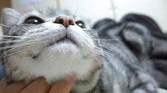 飼い主の上にどっかり 猫の強引な起こし方