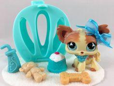 Littlest Pet Shop ULTRA RARE Cream & Tan Chihuahua #765 w/Accessories AUTHENTIC #Hasbro