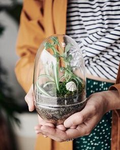 Whether you have houseplants, terrariums or kokedama moss balls, you can use these 5 Easy Tips to Help Your Houseplants Thrive even as the seasons change. By Grow and Grow Co Perth.