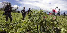 Mexican marijuana growers are losing out as legal weed proliferates across the United States—and this helps Mexico, Global Post reports. Drug Enforcement Administration, Houston Police, Drug Cartel, War On Drugs, Marijuana Plants, Nobel Prize, Medical Marijuana, Cannabis, It Hurts
