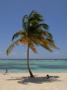 Republica Dominicana - Isla Saona 28 Marzo 2009