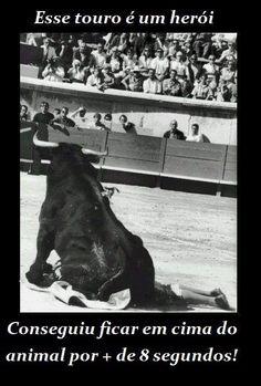 Este touro e um herói  Veja mais em: http://www.jacaesta.com/este-touro-e-um-heroi/