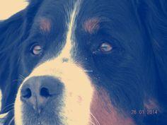 Ma chienne ♥