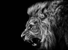 Lion Roar Black and White Wallpaper Lion Hd Wallpaper, Animal Wallpaper, Wallpaper Backgrounds, Wallpaper Desktop, Hd Desktop, Iphone Wallpapers, Sparkle Wallpaper, Artistic Wallpaper, Ink Art