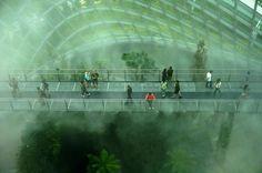 Walkway through a misty green interior