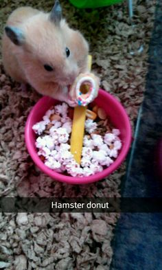 Hamster donut, I'll take a bakers dozen please! Hamster Stuff, Hamster Treats, Cute Hamsters, Mice, Fur Babies, Cute Animals, Sweet, Funny, Pretty Animals