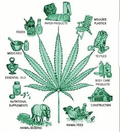 The many benefits of the hemp plant, can you tell me why it is illegal