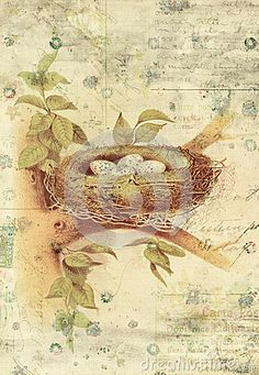 Nest and Bird Eggs Botanical Vintage Style Wall Art with Textured Background shabby style