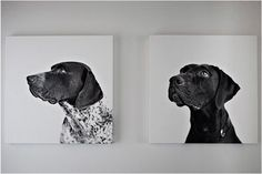 i think hubby (the dog lover) would love this of our pooches past and present.
