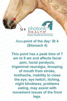 Acu-point of the day! Stomach 4  Want to learn more? Click here for more info - http://bit.ly/1bk4pb5
