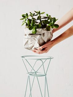 Indoor plants are back - Ivy Muse limited edition pot plant stands #interiordecor #garden