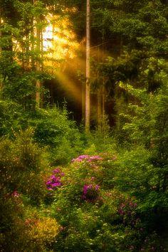 "bluepueblo: "" Sun Rays, Wales photo via pretty """