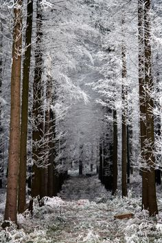 #Winter wonderland     -   http://vacationtravelogue.com For Hotels-Flights Bookings Globally Save Up To 80% On Travel   - http://wp.me/p291tj-5f