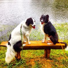 Doggy date on the dog bench! - Broemmelsiek Dog Park - Wentzville, MO - Angus Off-Leash #dogs #puppies #cutedogs #bigdogs #dogparks #wentzville #missouri #angusoffleash