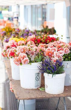 Fresh flowers at the Farmers' Market Flower Farm, My Flower, Cactus Flower, Fresh Flowers, Beautiful Flowers, Exotic Flowers, Purple Flowers, Spring Flowers, Wild Flowers