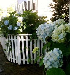 We love these gorgeous blue hydrangeas!