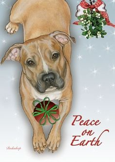 Peace on Earth Pit Bull Christmas Cards (Box of 10)