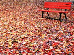 El otoño es la estación del presente: el pasado es sólo un cálido recuerdo y el futuro es demasiado frío.
