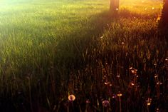 4608x3072 free desktop wallpaper downloads sunbeam