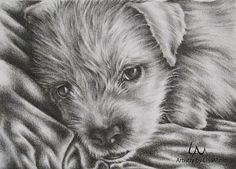 Original Pet Portrait and Dog Pencil Drawing in BLACK AND WITE. You may choose if you want the eyes in color at no extra charge. Lovers Art, Dog Lovers, Dog Pencil Drawing, Animal Drawings, Dog Drawings, Love Pet, Black And White Pictures, Dog Art, Pet Portraits