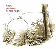"<span class=""readhead"">Snares</span><br /> Small-game snares can be made from the interior strands of parachute cord, braided strands of sinew, or fishing line. Snares stout enough to secure game as large as deer need to be made of rawhide or parachute c"