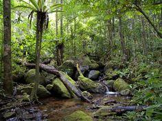 a.arman weblog: Valdivian coastline Peru - Endangered Forest _ Symbolize of nature