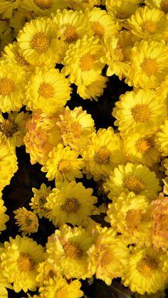 Yellow flowers, arrangement, 720x1280 wallpaper
