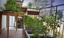 Nuove tendenze/ L'orto in balcone