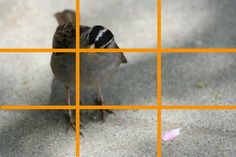 """""""Golden Rules of Photography"""": What makes a great photo great? Experiment with a #familyscience activity to see if key approaches to composition make a difference.  [Source: Science Buddies, http://www.sciencebuddies.org/blog/2015/06/golden-rules-of-photography-family-science-spotlight.php?from=Pinterest] #STEM #scienceproject #science"""
