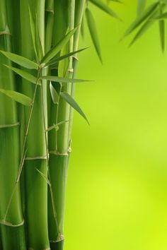 Bamboo with different colour background - shade of blue. #asiantheme