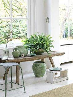 Decorar con cactus y suculentas Indoor Garden, Indoor Plants, Patio Plants, Clusia, Inside Plants, Inside Garden, Cactus Y Suculentas, Green Life, Small Patio
