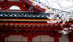 EP08 - Sakura e Startup japonesas mandam ver nos EUA | Kotobá Nihongo Podcast