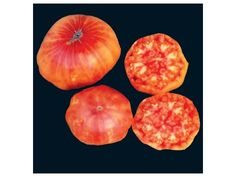 A huge, beefsteak-type West Virginia heirloom-- brilliant yellow color with red marbling. Hillbilly or Flame Tomato is beautiful sliced Yellow Fruit, Orange Yellow, Plants For Raised Beds, Red Streaks, Lettuce Seeds, Beefsteak Tomato, Tomato Seeds, Black Seed, Gardening