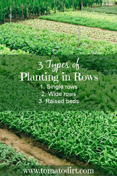 3 types of planting in rows when starting a vegetable garden with Tomato Dirt Vegetable Garden For Beginners, Starting A Vegetable Garden, Gardening For Beginners, Vegetable Gardening, Organic Gardening Tips, Sustainable Gardening, Urban Gardening, Natural Ecosystem, Growing Tomatoes In Containers